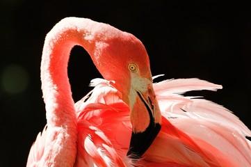 Stores à enrouleur Flamingo flamant