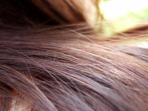 fibre de cheveux
