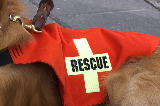 search and rescue dog.