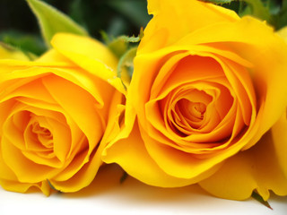 In de dag Macro yellow roses