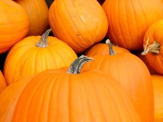 buncha pumpkins