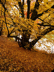 tree in the autumn forest