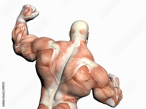 Anatomy Of The Man Body Builder Stock Photo And Royalty Free