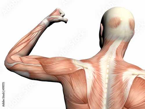 Anatomy Of The Man Muscular Man Stock Photo And Royalty Free
