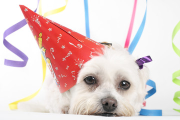 Wall Mural - party pooch