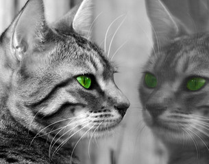 green eyed monster - fototapety na wymiar