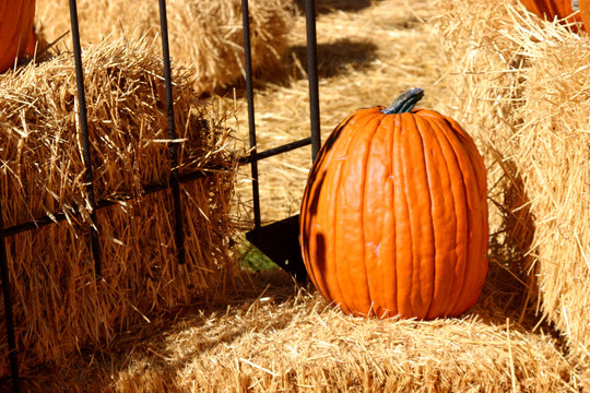 up close - pumpkin