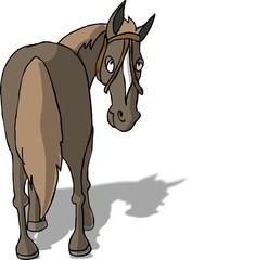 horse's rear