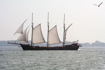 pirate ship sailing in toronto harbour