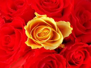 In de dag Macro bunch of red roses with one single yellow one