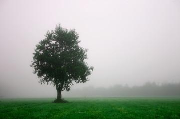 tree #1 (green)