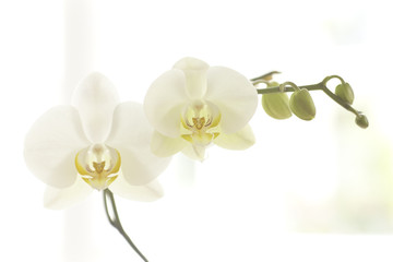 Door stickers Orchid orchidee 003