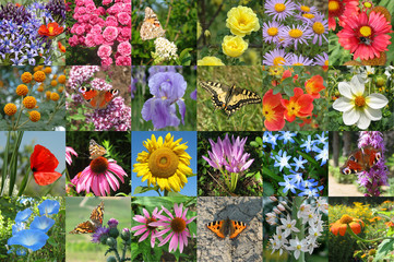 butterfly and flower collection