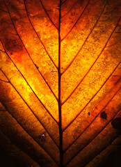 autumn leaf window