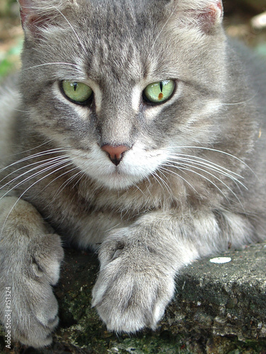 cats health problems and symptoms