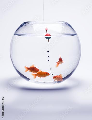 Poisson rouge photo libre de droits sur la banque d for Acheter poisson rouge angers