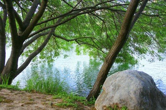 trees on town lake, austin,tx