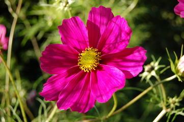 fleur de mindion