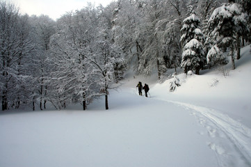skieurs en sous-bois