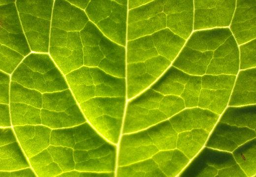 leaf texture 11