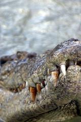 crocodile too close