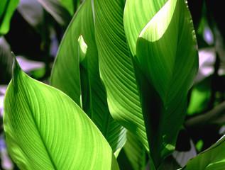 feuilles verts