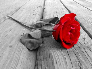 Wall Murals Red, black, white rose on wood bw