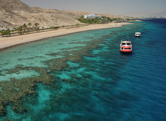 coral reef. the red sea.