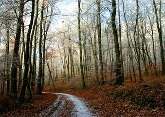 paysage d'hiver 1