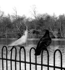 valentines park  birds