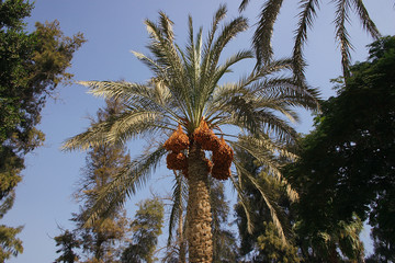 palm at resort