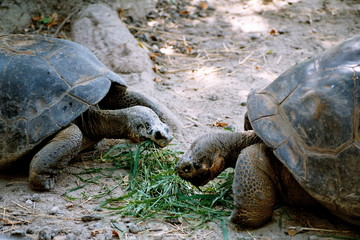 tortugas de galapagos