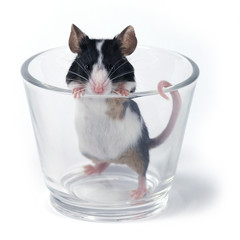 glass of... mouse