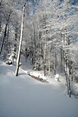 troncs blancs - pn 49x21