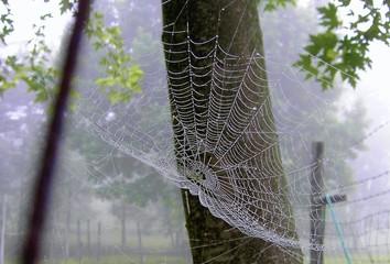 fog & web