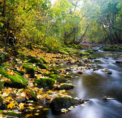 river with yellow leafs