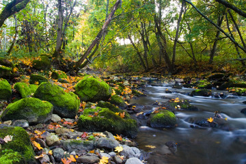 river with mossy stones