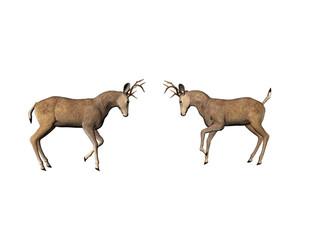 buck dual