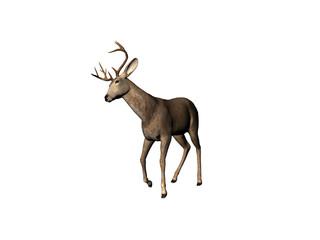 buck one