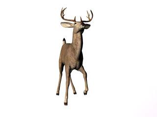 buck twelve