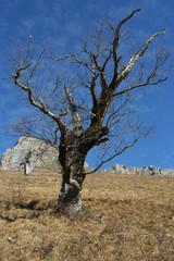 mort d'un arbre - pn 346x36