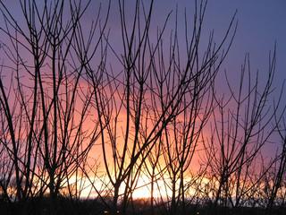 winter sunset through the trees