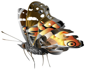 generic butterfly illustration