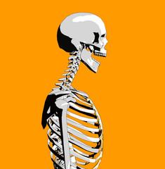 bone 51