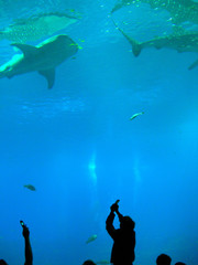 Poster Submarine aquarium
