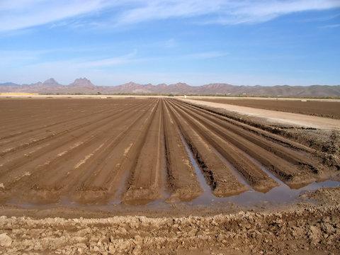 freshly plowed and irrigated farmland