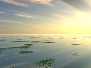 lilly pad lake