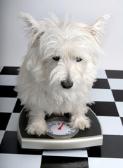 how much do i weigh?
