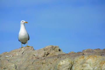 awkward seagull on rocks with space