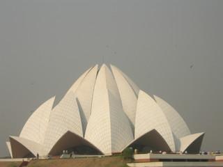 Foto op Aluminium Delhi lotus blossom